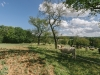 Galloways-20140812-6495