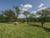 Galloways-20140812-6547