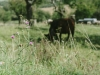 Galloways-20140812-6565