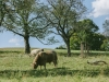 Galloways-20140812-6653