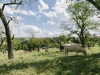 Galloways-20140812-6504