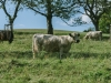 Galloways-20140812-6641
