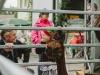 agp-hoffest-20150620-1600